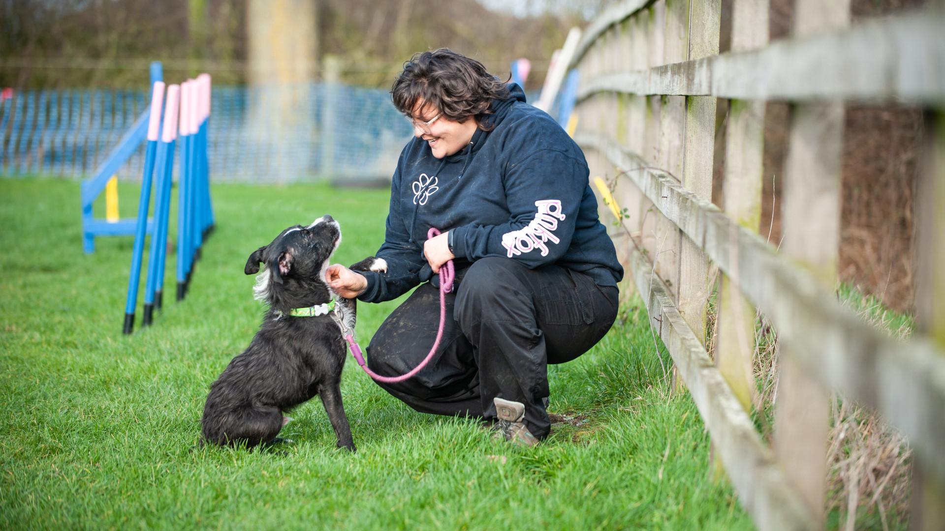 Canine positive behaviour specialist